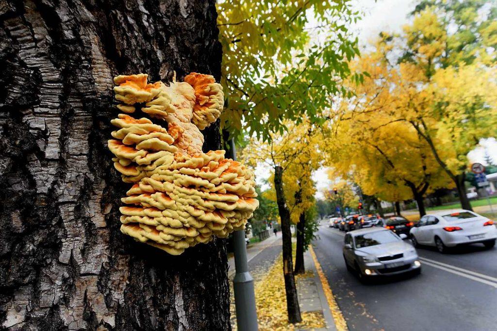 grzyby na fotografii