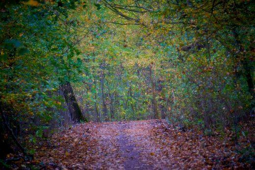 jesienne kolory w lesie