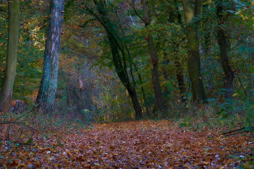 jak fotografować jesień