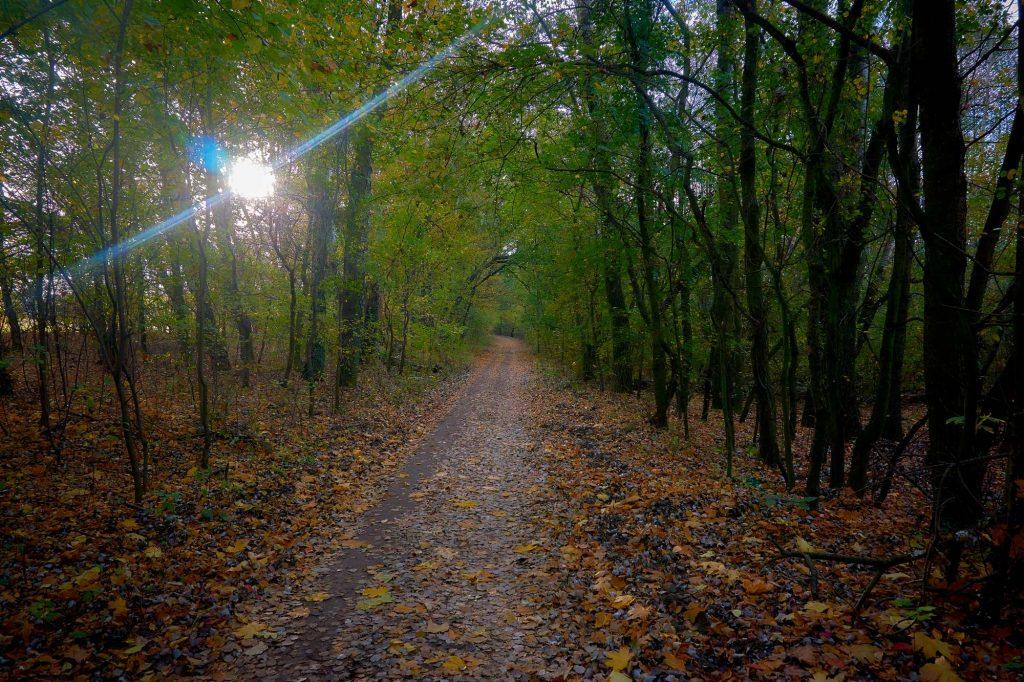 lubię fotografować jesień