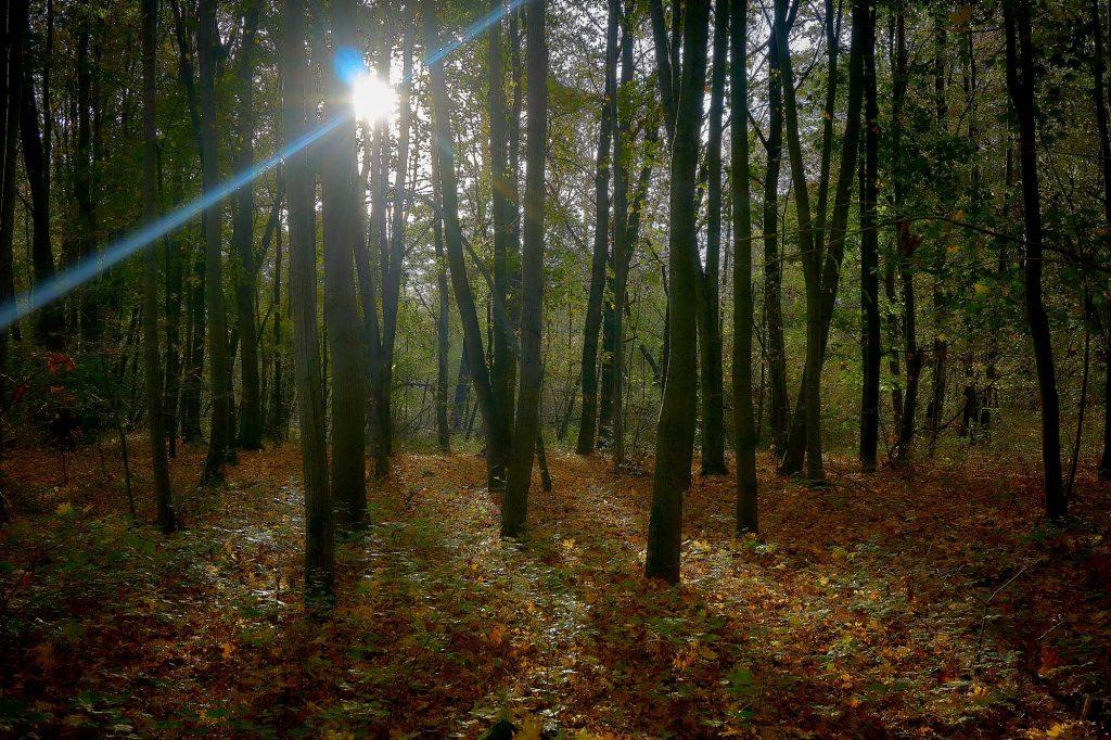 jesień najbardziej fotogeniczna pora roku