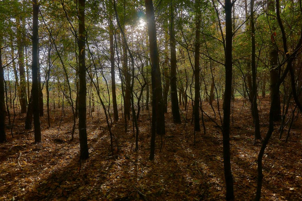 kolory w lesie