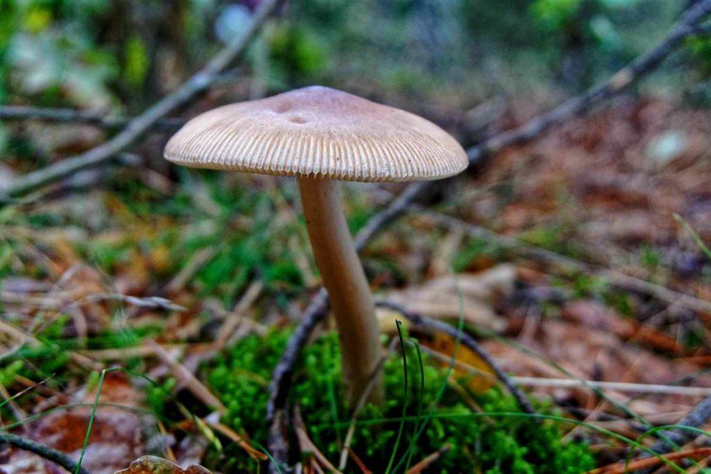 fotografujemy grzyby